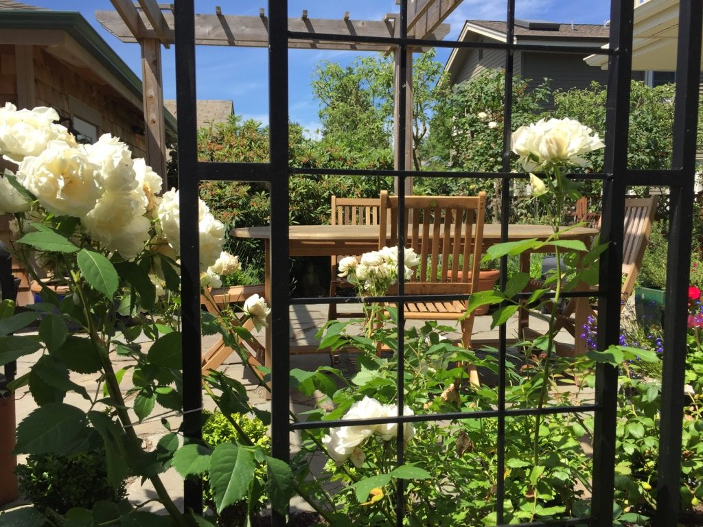 Through the garden trellis